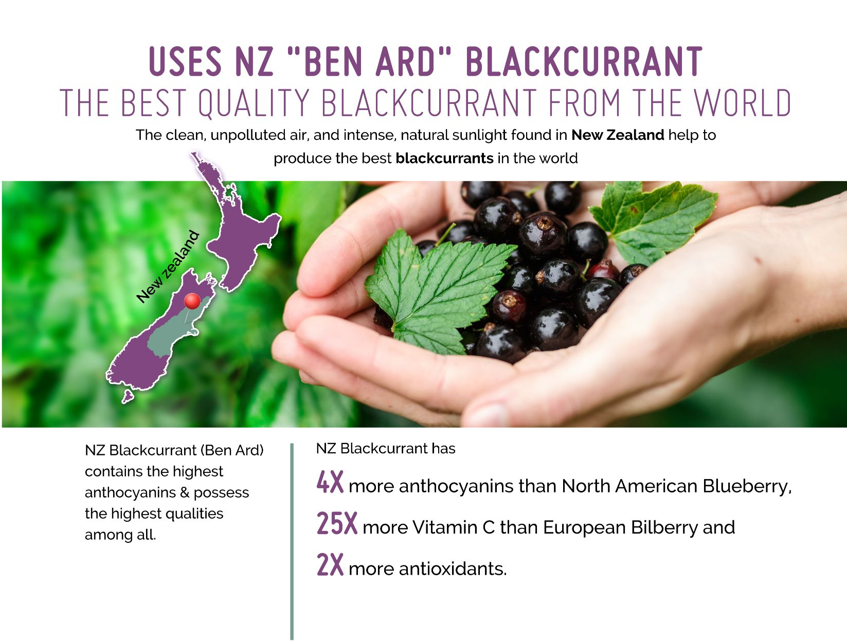 New Zealand Ben Ard Blackcurrant Extract